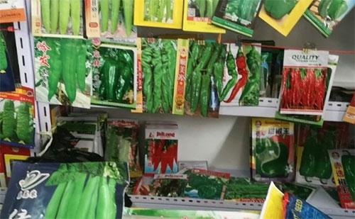 国家救灾储备种子启动,确保河南灾后生产用种