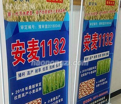 小麦种子-安麦1132