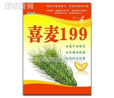 喜麦199-小麦种子-郑州喜得粮