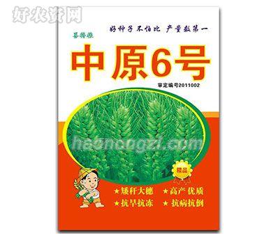 中原6号-小麦种子-郑州喜得粮