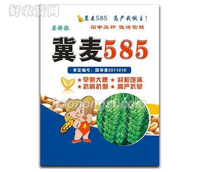 冀麦585-小麦种子-郑州喜得粮